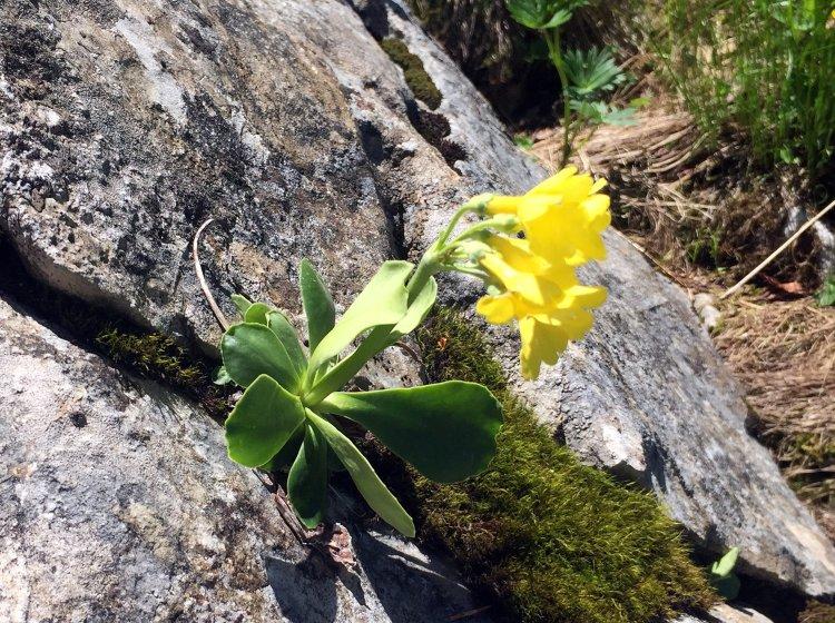 Bergtour zum Besler: Bergblumen am Wanderweg