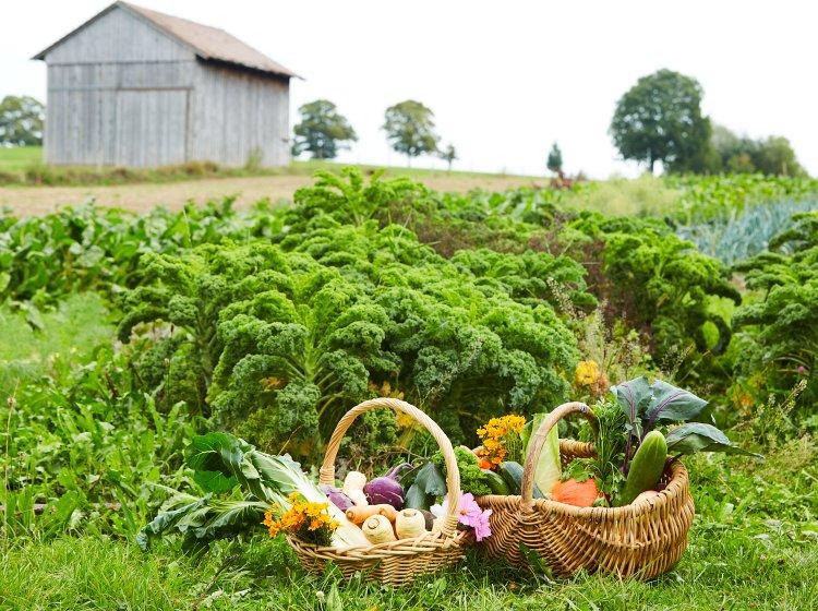100% Bioprodukte und Zutaten