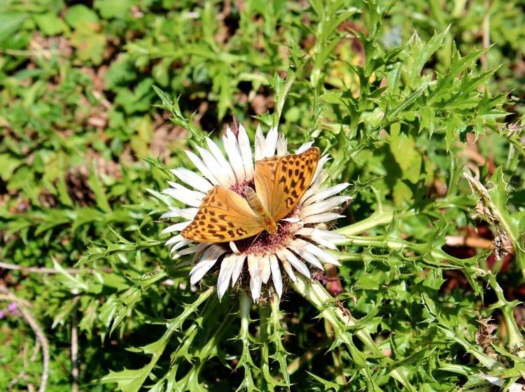 Kurzurlaub im Allgäu | Natur erleben